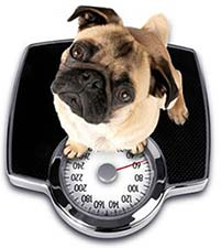 70-pet-boxer-weighed.jpg