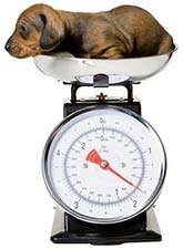 90-puppy-on-scales.jpg